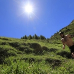Corredor de Trail español Genis Zapater